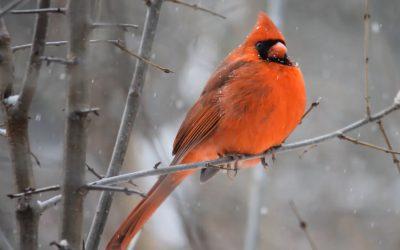 Happy Holidays From Woodland Strategies